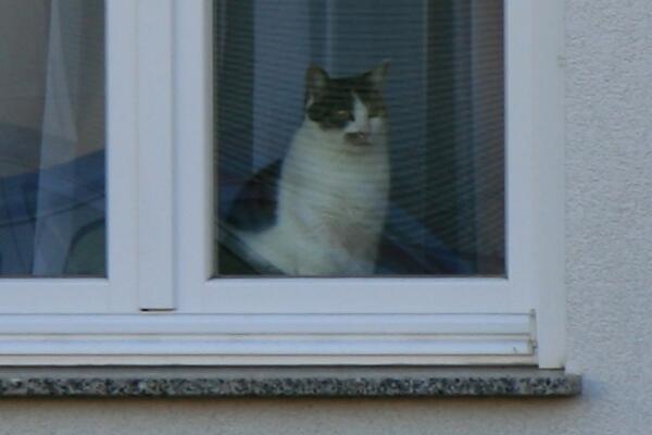 Die Nachbarskatze wacht